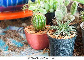 Stock image of cactus