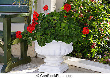 Red Geraniums in pots at garden - Red Geraniums in pots in...