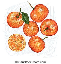 calamondin - unique style illustration of Calamondin...
