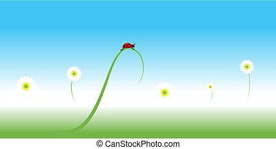 Ladybug, spring background