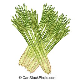 lemon grass - unique style illustration of lemon grass...