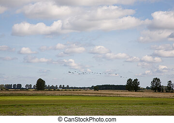 Late summer rural landscape with cranes flying