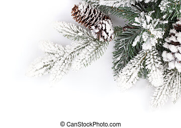 Fir tree branch covered with snow Isolated on white...