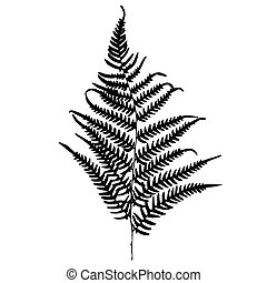 Fern silhouette Isolated on white background