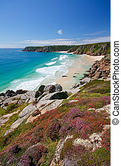 Porthcurno, Cornwall, UK - Heather on the cliffs over beach...