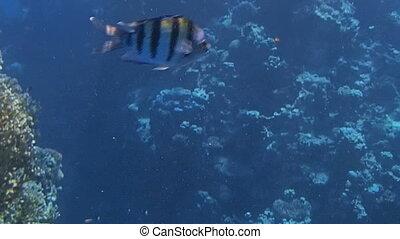 red sea snorkeling