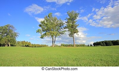 Two trees in a meadow - Two trees on the background field...