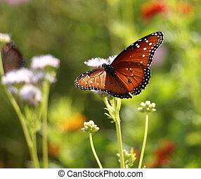 Spread Your Wings - Monarch Butterflies spreading its wings...