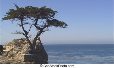 Monterey Lone Cypress_multi mov - Shot 1 - MS with the Lone...