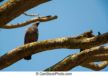 A Bird on Branch