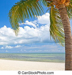 Palm trees on the beach ion Key West Florida, beautiful summer landscape