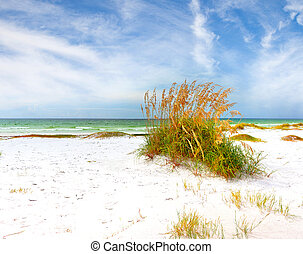 Summer landscape with Sea oats and grass dunes on a...