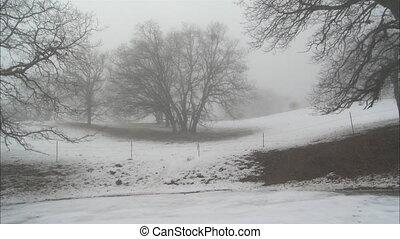 Mt Hamiliton Snow Fall WS