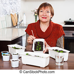 Mature woman working with seedlings in home kitchen