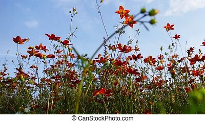 orange flowers in the flowerbed