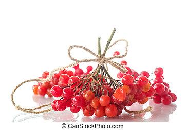 viburnum - Ripe red viburnum on a white background