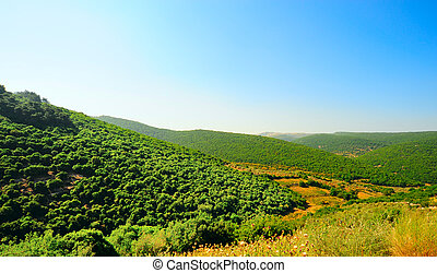 Galilee - Forest Landscape Of North Galilee In Early Spring,...