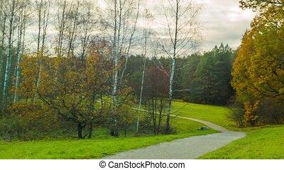 Autumn park panorama