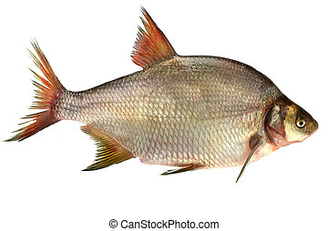 bream isolated on the white background