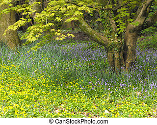woodland edge, Wales - Woodland edge showing spring flowers...