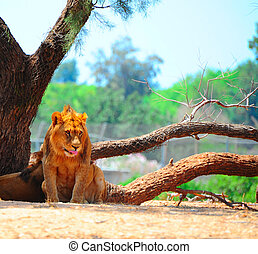 Lions Rest Most of the Time and Only Hunt Once Every Few...