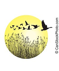 Geese and reeds in the ring - A circular piece of landscape...