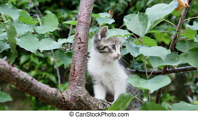 cute gray kitten on tree