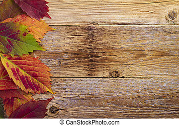 autumn maple leaves over old wood
