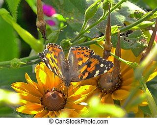 papillon monarque sur une fleur