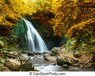 forest waterfall - Autumn creek woods with yellow trees...