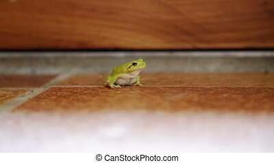 Green frog on floor in South of France Home