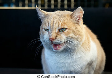 Portrait of beautiful angry ginger cat - Beautiful angry...