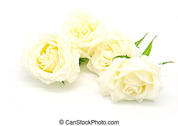 yellow rose - Beautiful yellow rose, isolated on white...