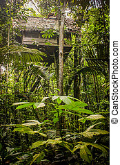 Traditional house in the amazonas jungle