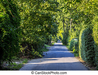 alley with large green trees
