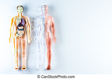 body part - vision of human organs