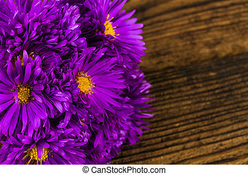 lilac chrysanthemum on wooden background
