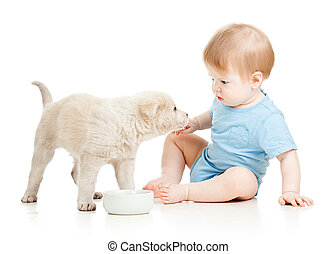 cute baby boy looking at puppy isolated