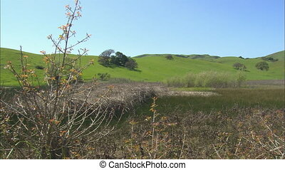 Rolling Hills Wetlands Panning - WS of rolling hills in...