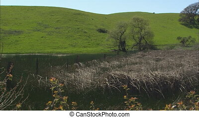 Rolling Hills Wetlands WS - WS of green rolling hill in...