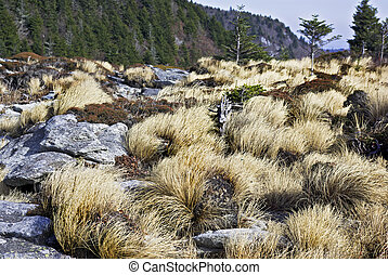 Appalchian Wild Grass - The wild grass on top of Grandfather...