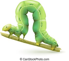 Caterpillar realistic isolated - Green caterpillar insect...