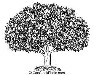 Apple tree  - Engraved apple tree full of ripe apples