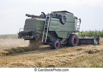 Working combine harvester