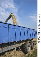 Wheat unloads - Combine harvester unloads wheat into the...