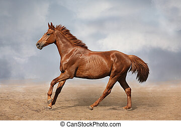 Beautiful wild brown horse galloping on sky background