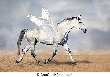 cinzento, cavalo, pegasus, Trotar, em, a, deserto,