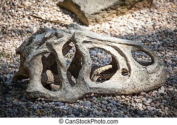Fossil of dinosaur