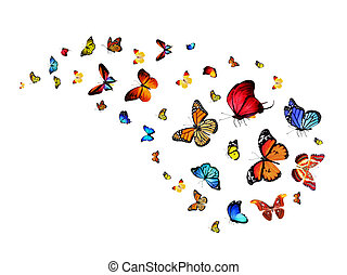 Flock of butterflies