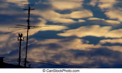 Antenna sunset blue - silhouette of TV antenna against the...